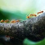 fallbrook pest control company