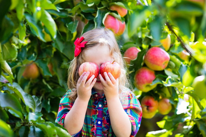 5 Low-Maintenance Fruit Trees to Consider Planting This Summer in San Diego