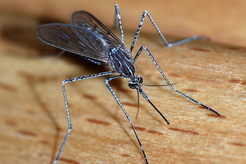 What Are Crane Flies (Mosquito Hawks), and Why Are They Everywhere in San Diego County This Year?